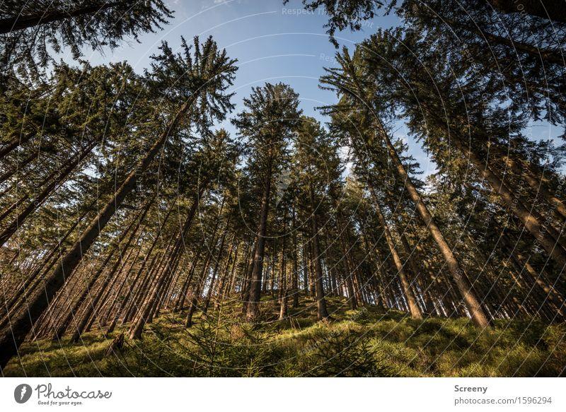 Im Land der Baumriesen Himmel Natur Pflanze blau grün Baum Landschaft Wald Frühling braun Wachstum wandern Sträucher hoch groß Schönes Wetter