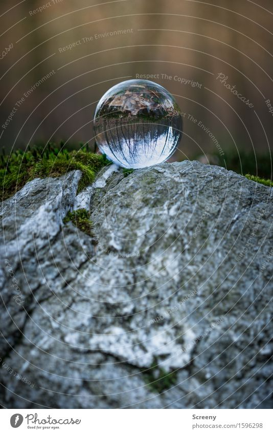 Over the top Natur Landschaft Frühling Moos Wald Felsen rund grau Gelassenheit geduldig ruhig Selbstbeherrschung Kristallkugel Glaskugel Farbfoto Außenaufnahme