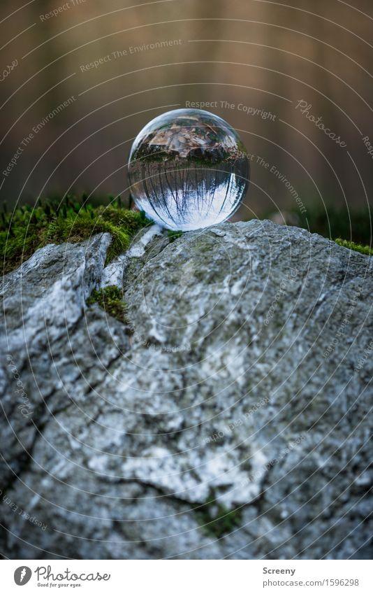 Over the top Natur Landschaft ruhig Wald Frühling grau Felsen rund Gelassenheit Moos geduldig Selbstbeherrschung Glaskugel Kristallkugel