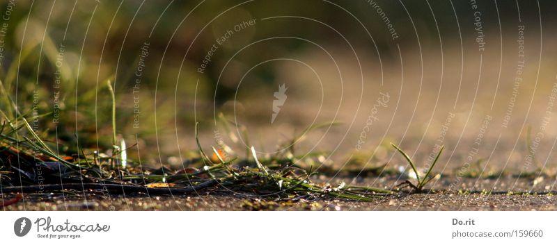 3-Tage Bart... :-) Dreitagebart dreckig Wege & Pfade bodennah Straße Straßenreinigung Reinigen Gartenarbeit unordentlich ungepflegt Winter Frühling Sauberkeit