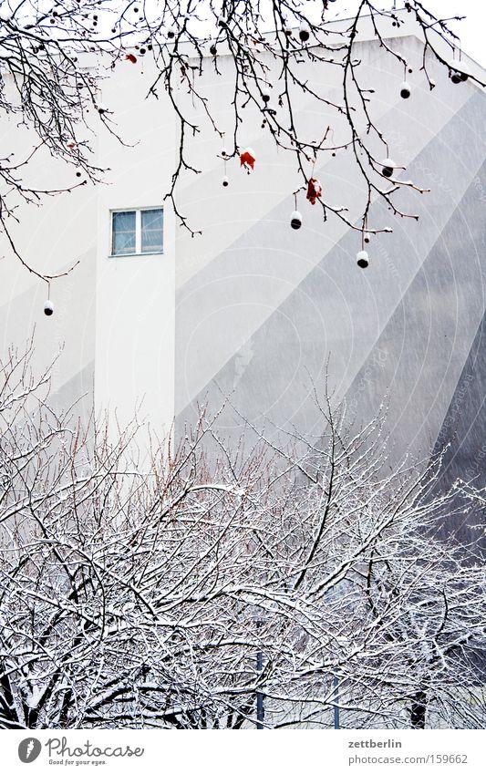 Tarnung Winter Schnee Neuschnee Schneedecke Haus Stadthaus Farbe gestalten Baum Platane Mauer Brandmauer Fenster Detailaufnahme kunst am bau fassadengestaltung