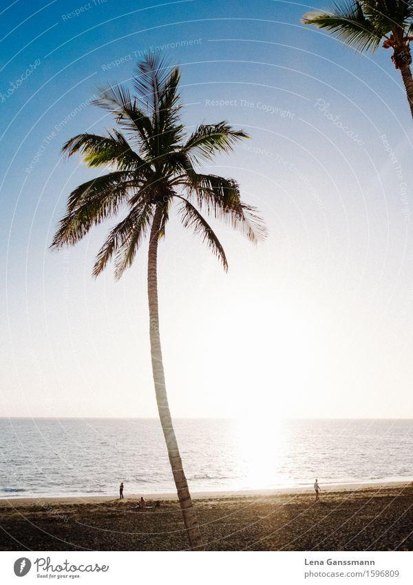 Palmen in Puerto Noos Mensch Ferien & Urlaub & Reisen Pflanze Sommer Wasser Baum Sonne Meer Erholung ruhig Ferne Strand Küste Tourismus Zufriedenheit Luft