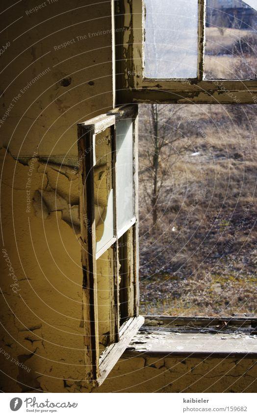 Blick nach draußen ruhig Haus Fenster Gebäude Vergänglichkeit verfallen Verfall Vergangenheit Ruine Leerstand Unbewohnt Fensterblick Unbewohnbar