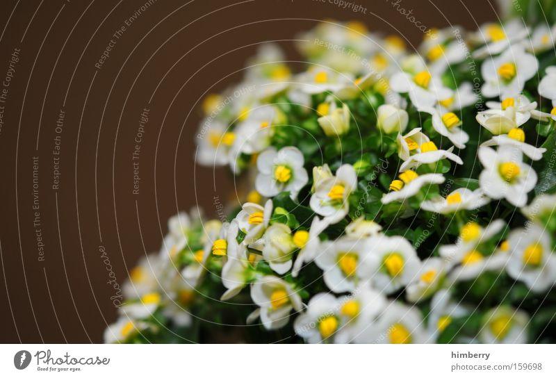 blumenkopf Natur Pflanze schön Blume Frühling Blüte Hintergrundbild Park frisch ästhetisch Botanik Floristik Gartenbau