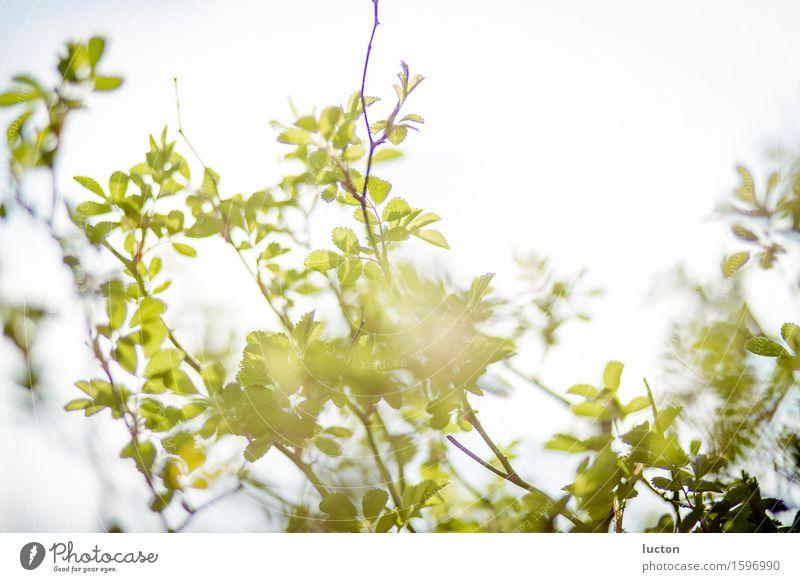 Frühlingsgold Umwelt Natur Landschaft Pflanze Tier Himmel Wolkenloser Himmel Sonne Sonnenlicht Schönes Wetter Baum Sträucher Blatt Zweig Garten Park Wald Holz