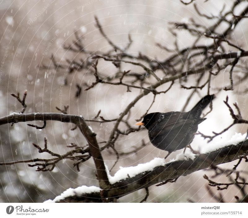I Have A Plane To Catch. Winter ruhig Einsamkeit Tier Schnee Schneefall Traurigkeit Vogel warten Wind Wetter Pause Überleben ungemütlich rieseln Amsel