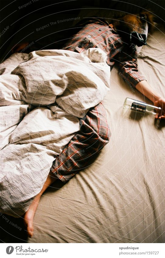 Einsamer Morgen Pferd Trauer Bett trinken Maske Alkoholisiert Verzweiflung Alkohol Schwäche Bettdecke verkatert Rausch Spirituosen Vodka