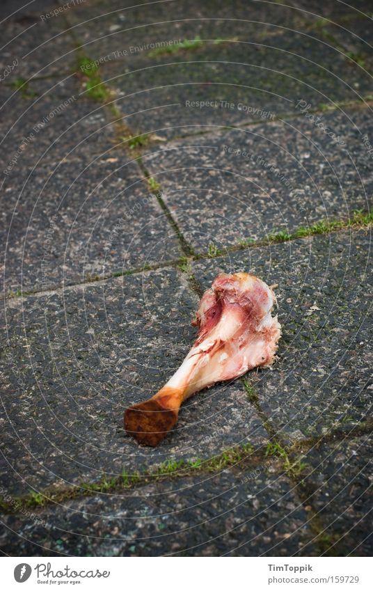 Das Gesetz der Straße Ernährung Straße Kraft Lebensmittel Armut Kraft Verkehrswege Fleisch kämpfen hart Skelett Beute Evolution