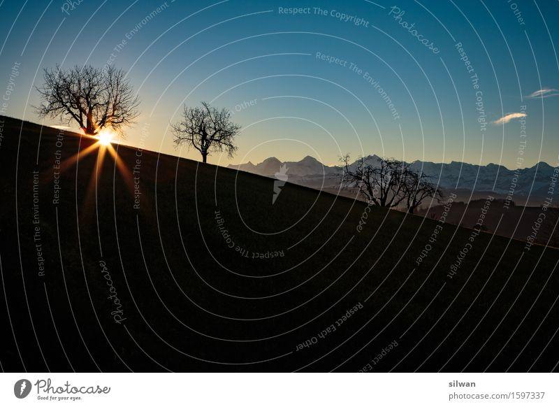 Sonnenaufgang Berner Alpen Himmel blau schön Baum Landschaft Wolken ruhig schwarz Berge u. Gebirge kalt gelb Horizont glänzend Feld elegant