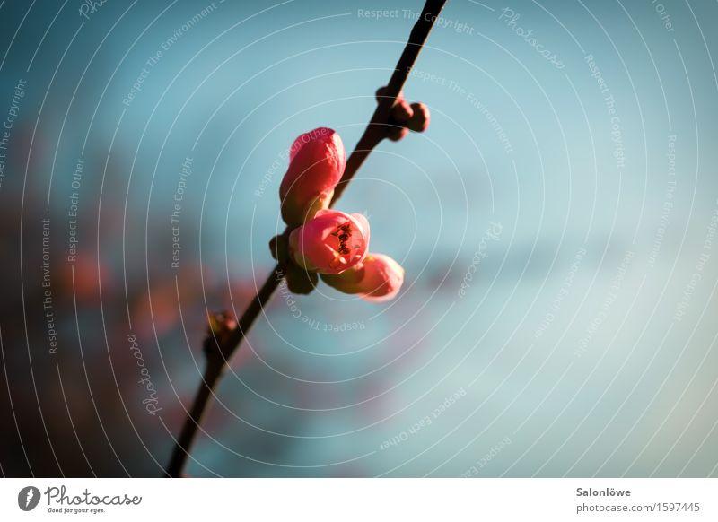 Erwachen Himmel Natur Pflanze Blüte Frühling Wachstum Blühend Schönes Wetter aufwachen