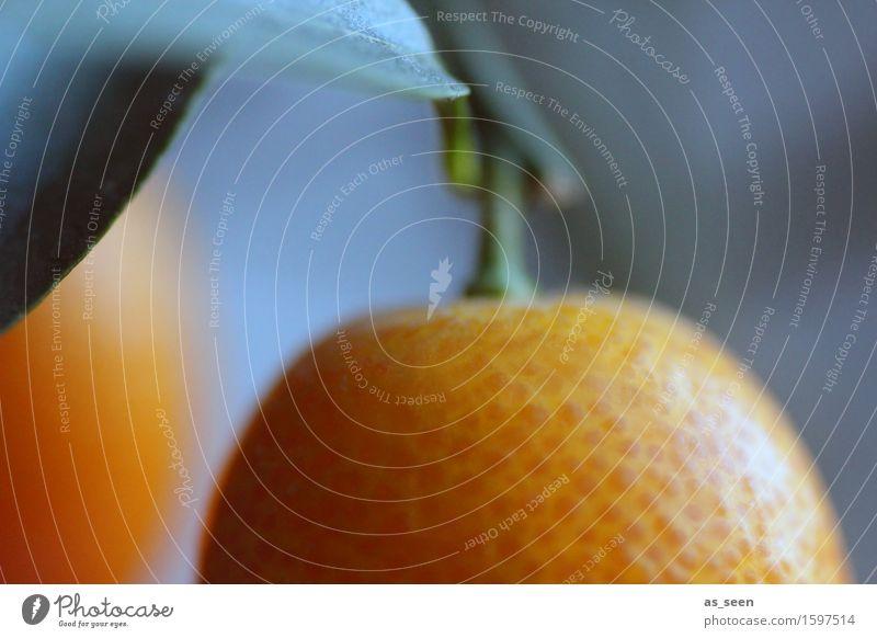 Orangenbaum Natur Pflanze grün Sommer Baum Gesunde Ernährung Blatt Umwelt Gesundheit Frucht orange Orange Getränk Wellness Frühstück Duft