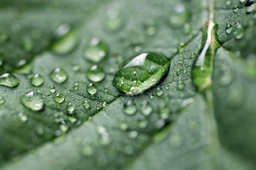 Tau Natur Pflanze schön grün Sommer Farbe Wasser Blatt ruhig Umwelt Leben Frühling Gesundheit Garten glänzend Wachstum