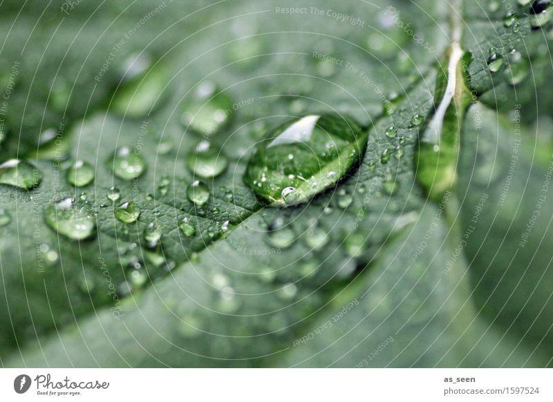 Tau schön Gesundheit Wellness Leben harmonisch ruhig Meditation Ausflug Garten Umwelt Natur Pflanze Wasser Wassertropfen Sonnenlicht Frühling Sommer Blatt