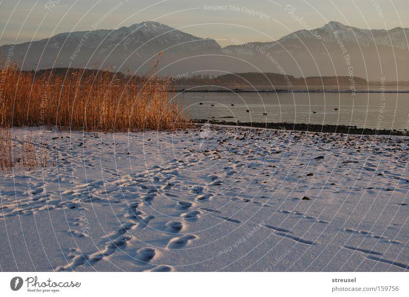 am Chiemsee Natur Winter Strand Ferien & Urlaub & Reisen ruhig kalt Schnee Erholung Berge u. Gebirge See Landschaft Zufriedenheit Stimmung wandern Nebel Ausflug