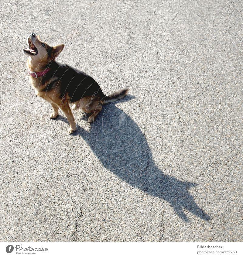Verlassen Hund Haustier Mischling Landraubtier Fell Gebiss Schnauze Halsband Treue Tierliebe Einsamkeit weinen Asphalt Schatten Säugetier Hundehalsband