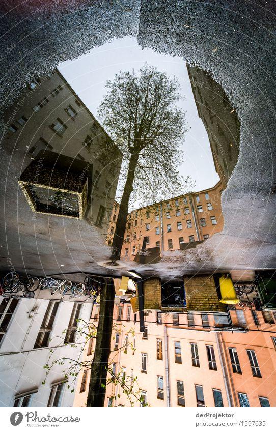 Da wächst ein Baum in der Pfütze Ferien & Urlaub & Reisen Stadt Haus dunkel Umwelt Architektur Gefühle Frühling Berlin Gebäude Tourismus Kraft Ausflug Coolness