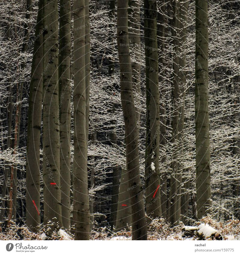 Frosten Baum Winter Blatt Wald kalt Schnee Eis Umwelt Schilder & Markierungen Frost Sträucher Klima Ast Tanne gefroren