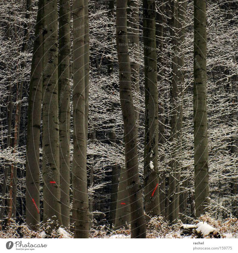 Frosten Winter Schnee Winterwandern Forstwirtschaft Umwelt Eis Baum Sträucher Wald Schilder & Markierungen kalt Klima Umweltschutz Ast Tanne Baumstamm Unterholz