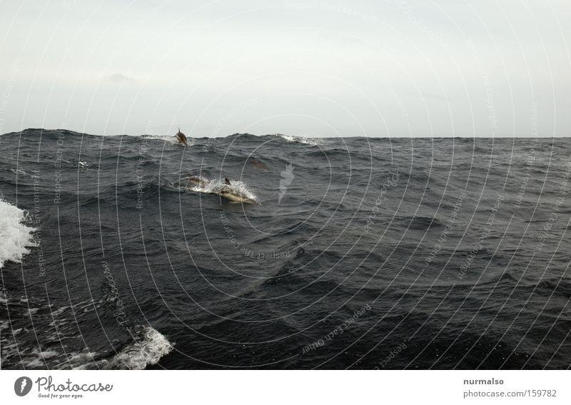 damals auf der Biskaya Meer Gefühle springen Freiheit Wellen Horizont Fisch fahren Reisefotografie Segel Segelboot Atlantik Delphine Meerwasser