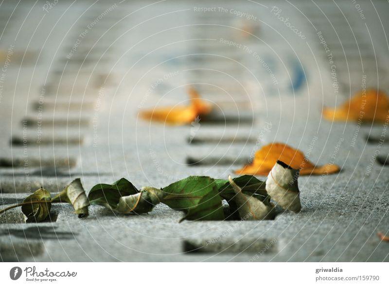 Trockenlaub Blatt trocken orange grün grau Gitternetz Beton vertrocknet kalt Herbst Vergänglichkeit Verkehr Außenaufnahme