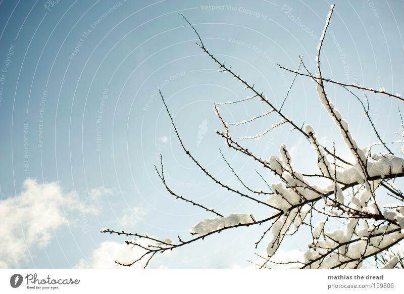 WINTERZAUBER schön Himmel Baum Winter Wolken kalt Schnee Ast Idylle kahl Pflanzenteile