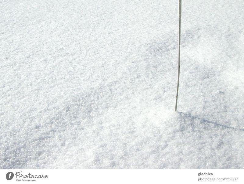 Schnee gepiekst weiß ruhig Winter Berge u. Gebirge kalt Eis leer Vergänglichkeit Stock Stab stechend Flocke Strukturen & Formen piecken