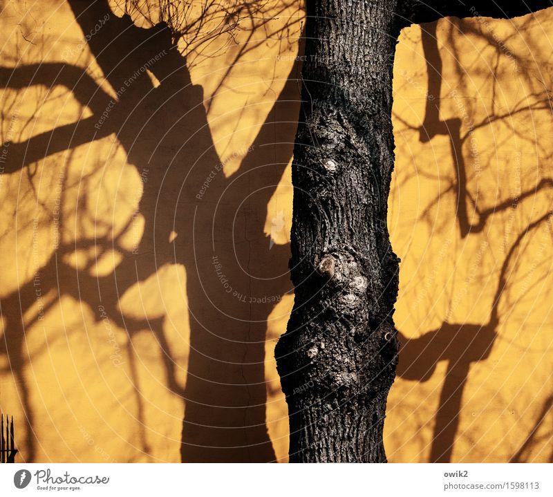 Stille Tage in Merseburg Baum Wand Mauer Deutschland Fassade Idylle Baumstamm Stadtzentrum Kleinstadt bevölkert Zweige u. Äste Sachsen-Anhalt