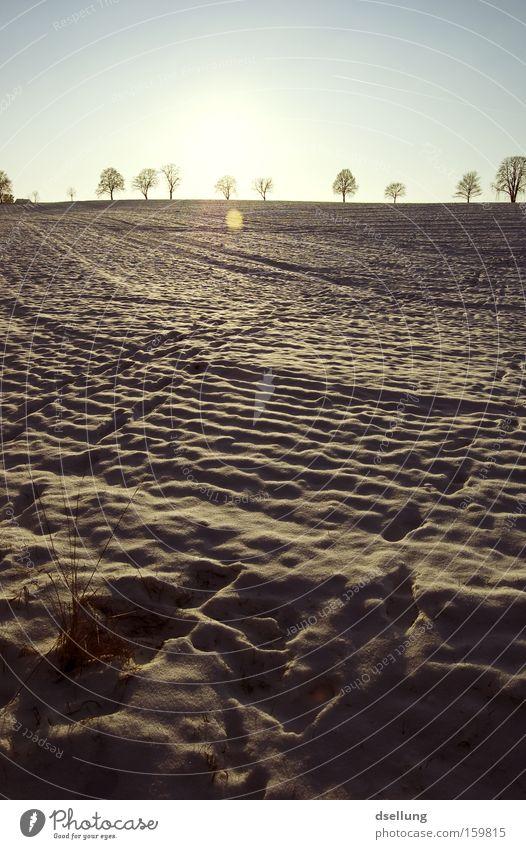 Spuren im Schnee Winter kalt Schnee Gras Feld Horizont Spuren Fußspur