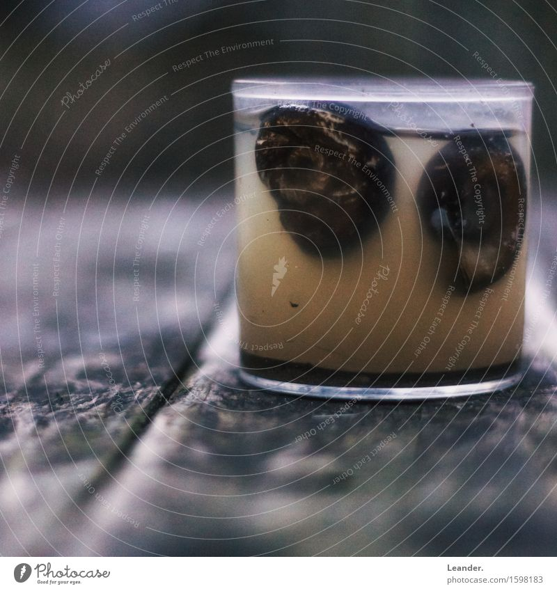 Schneckenglas Aquarium 2 Tier Glas alt Ekel exotisch fantastisch Neugier braun Abenteuer entdecken einzigartig schön Tod Schneckenhaus Wissenschaftsmuseum