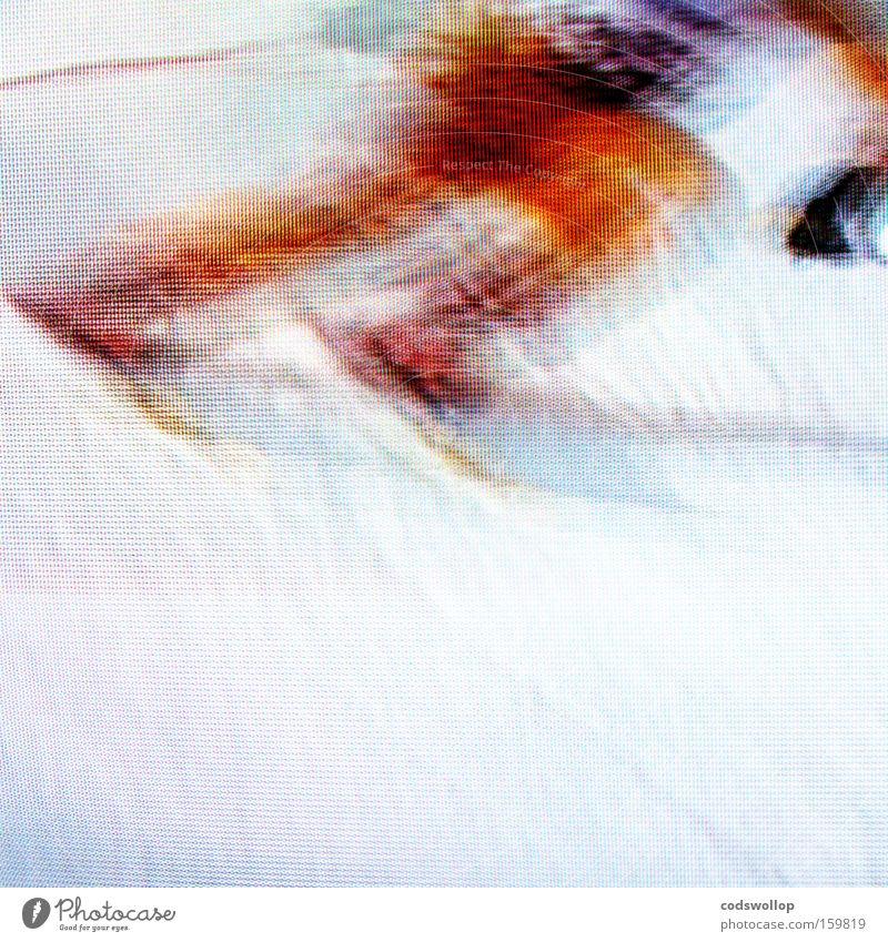 3D downhill Schnee Sport Spielen Bewegung Skirennen Sportveranstaltung Wintersport Skifahrer Abfahrtsrennen Sportler Rennsport