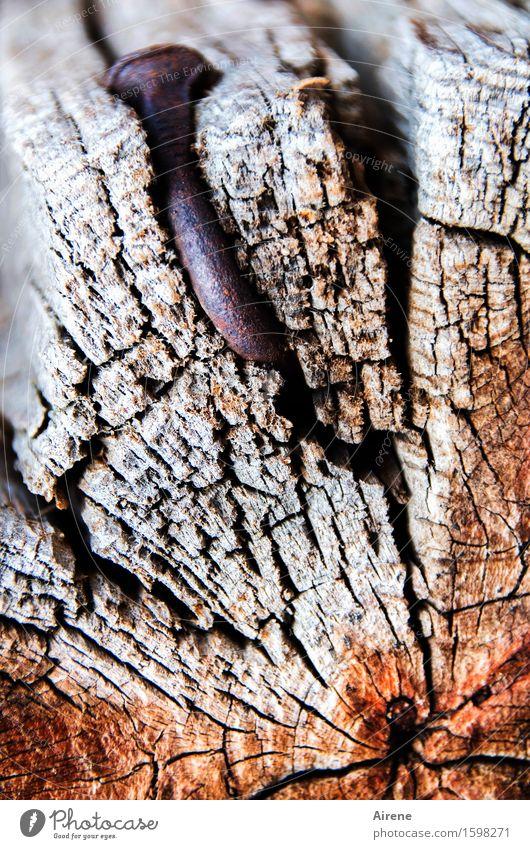 Nagelstudie Hütte Holzwand Holzbalken Dachgebälk Metall Rost Riss bauen alt eckig Spitze braun grau rot Kraft Aggression Senior bizarr Misserfolg Biegung krumm