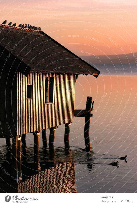 Romantik!!!! ruhig See Vogel Tierpaar paarweise Romantik Frieden Hütte Steg Möwe Abenddämmerung Ente Bayern Pfosten Holzhaus Baracke