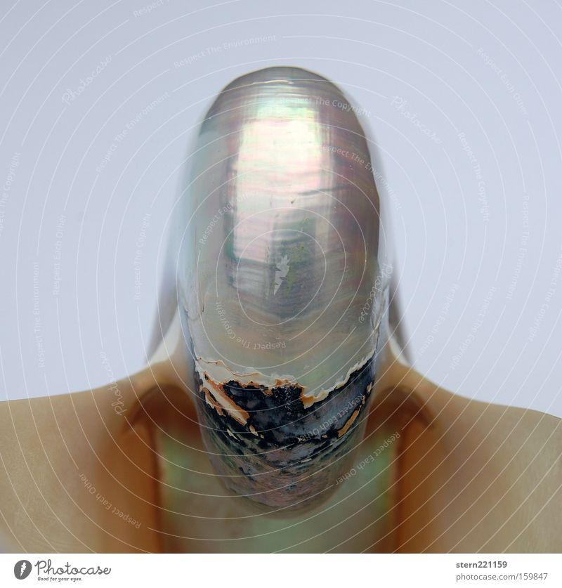 galaktisches Detail ... Muschel Nautilus Außerirdischer Surrealismus Perlmutt Anmut ästhetisch Kämpfer Kraft unheimlich fremdartig obskur schön fremde Galaxien