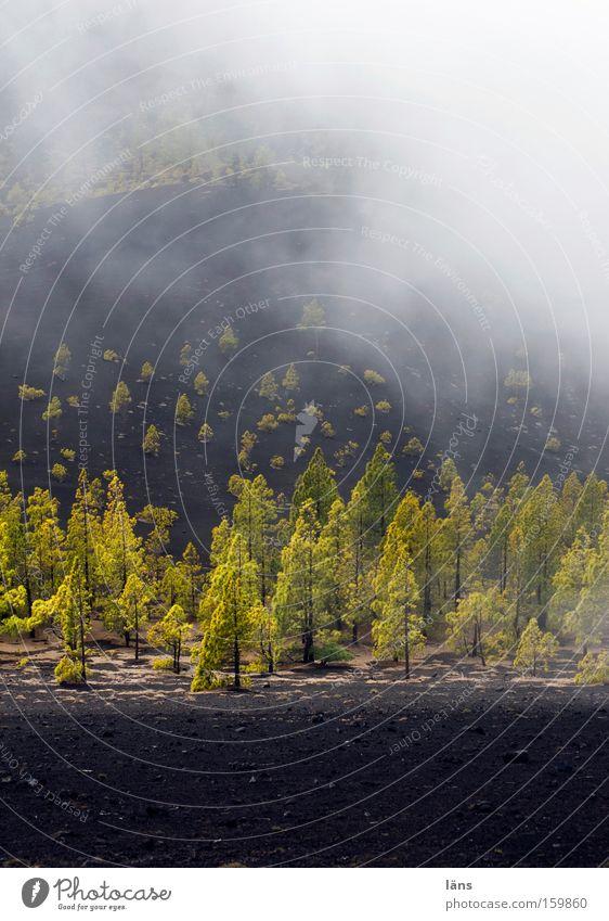 Elementar Baum Pflanze Wolken Berge u. Gebirge Landschaft Nebel Wind Wetter Umwelt Erde ästhetisch Wachstum fantastisch außergewöhnlich Urelemente
