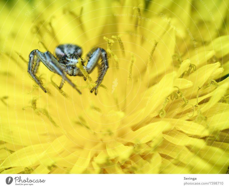 Auf der Lauer nach Beute Umwelt Natur Landschaft Pflanze Tier Baum Blume Gras Sträucher Moos Blatt Blüte Wildpflanze Garten Park Wiese Feld Wald Wildtier Spinne