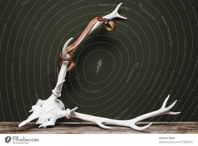 """""""done"""" exotisch Umwelt Tier Haustier Schlange 1 Jagd ästhetisch außergewöhnlich Erotik gefräßig elegant Surrealismus Horn Farbfoto Innenaufnahme Menschenleer"""
