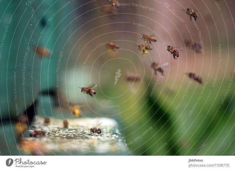 Ab gehts ins Wochenende... Natur schön Tier Umwelt Wiese Garten Lebensmittel Park Ernährung Klima einzigartig heiß trendy Biene Sammlung Landen