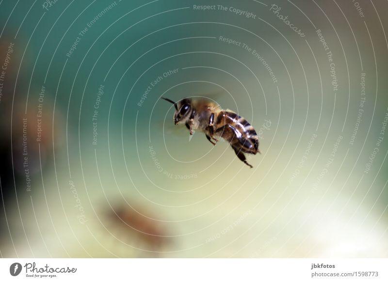 Einsamer Kämpfer Natur schön Sommer Erotik Tier Umwelt Frühling außergewöhnlich Garten Lebensmittel Park Luftverkehr Ernährung ästhetisch einzigartig bedrohlich