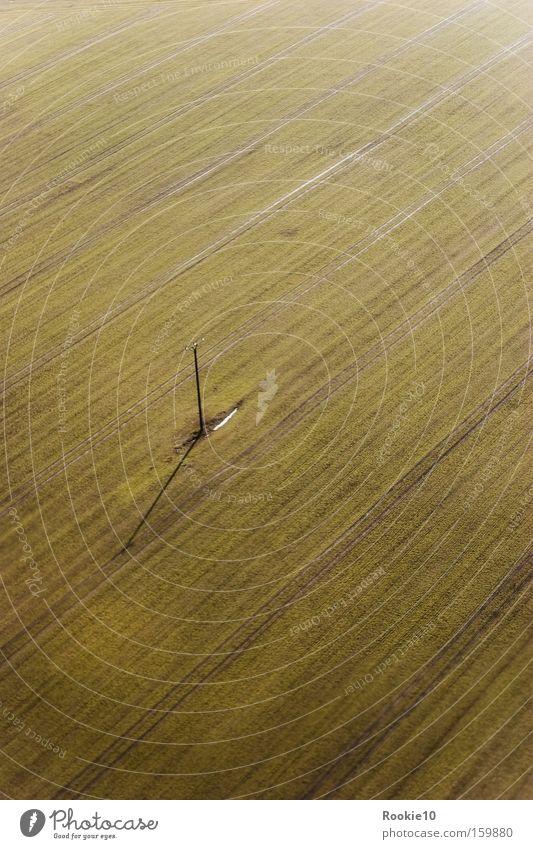 Straight forward... Frühling Linie vorwärts grün Natur Vogelperspektive Teilung Dynamik Bewegung Schatten Einsamkeit Feld Freiheit Außenaufnahme stehengeblieben
