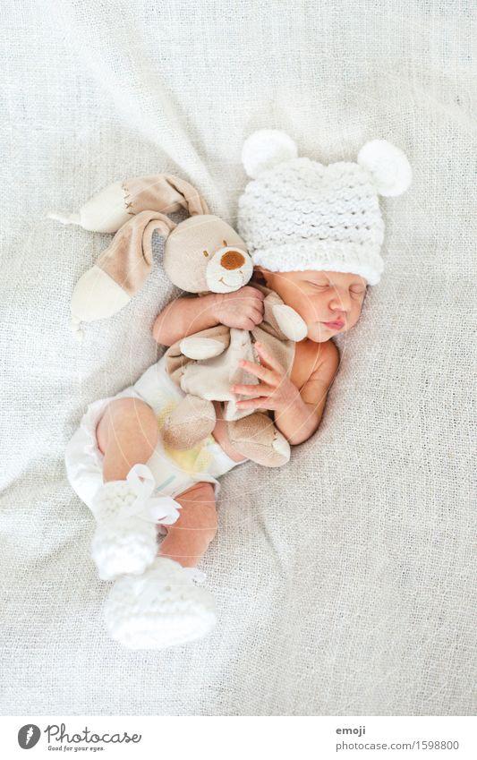 kuscheln maskulin Baby Kindheit 1 Mensch 0-12 Monate Mütze kuschlig klein weiß Kuscheln schlafen Stofftiere Farbfoto Innenaufnahme Hintergrund neutral Tag