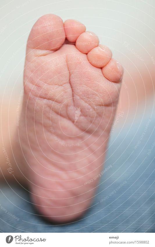 kleiner Fuss Baby Kindheit Haut Fuß 1 Mensch 0-12 Monate weich Farbfoto Innenaufnahme Nahaufnahme Tag Schwache Tiefenschärfe