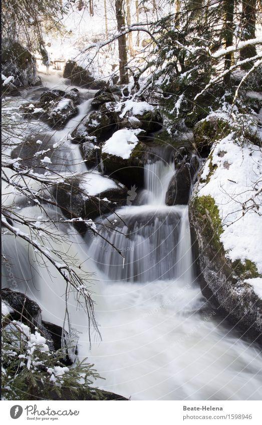 Der Winter ist zurückgekehrt Tourismus Ausflug Winterurlaub Natur Landschaft Urelemente Wasser Eis Frost Schnee Triberg Stein ästhetisch dunkel rebellisch