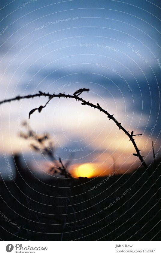 Abendstund' hat Gold im Mund. Natur Sonnenaufgang Sonnenuntergang glänzend genießen träumen rund schön stachelig gold schwarz Romantik Müdigkeit Vergänglichkeit