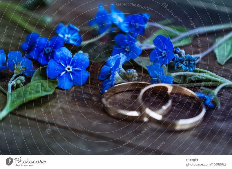 Vergiss mein nicht Pflanze blau Blume Feste & Feiern gold Hochzeit
