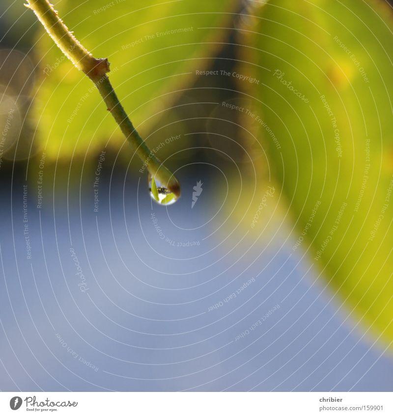 Warten... Wasser Blatt Frühling Regen glänzend Wassertropfen Tropfen fallen Tau Sammlung schmelzen Tauwetter