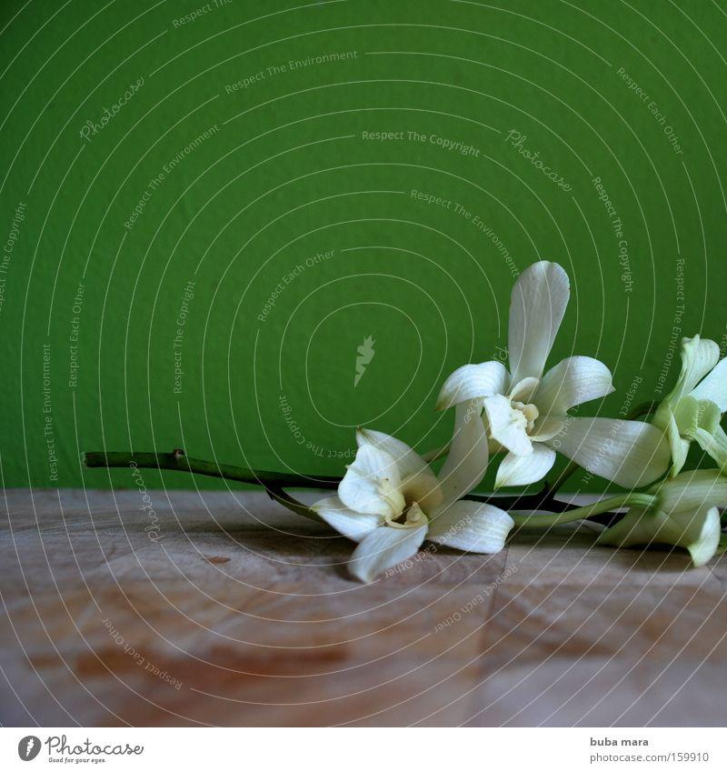Grünzeug Pflanze Orchidee grün Blume Thailand Schmarotzer schön weiß