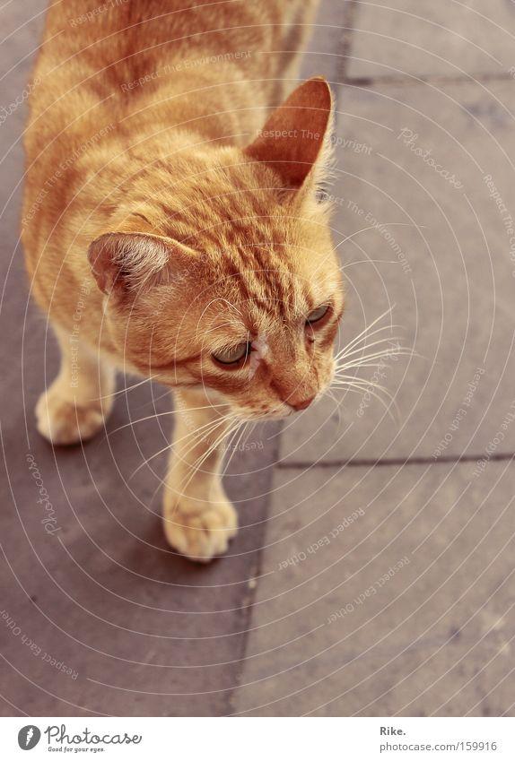 Immer der Nase nach. Farbfoto Außenaufnahme Tag Wegsehen schön Tier Fell Haustier Katze Pfote 1 beobachten klein niedlich süß wild rot Kraft Mut Tierliebe