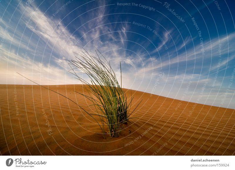 Seitenwind Wüste Sand Düne rot Abend Wolken blau Himmel trocken Wärme Wind Ferien & Urlaub & Reisen Naher und Mittlerer Osten Expedition Gras Erde