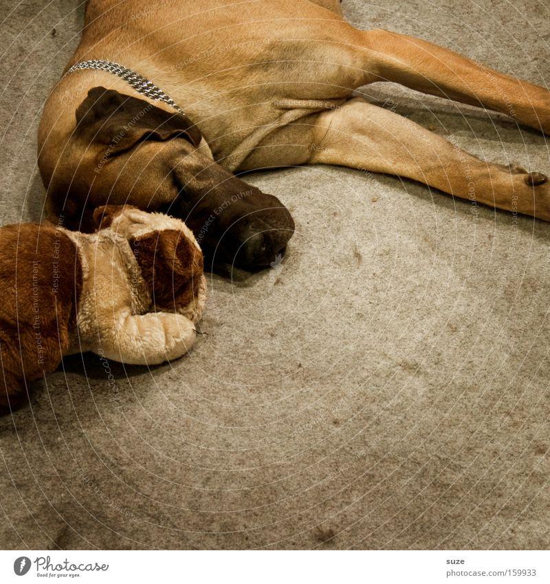Freunde fürs Leben Hund Tier Freundschaft träumen Zusammensein liegen schlafen Fell Haustier Säugetier Treue Schnauze Kuscheln Tierliebe Teddybär ruhen