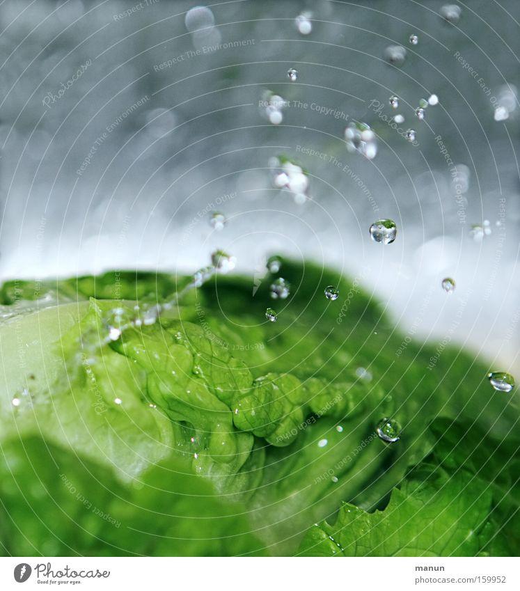 Frisches Grün Farbfoto Gedeckte Farben Innenaufnahme Nahaufnahme Makroaufnahme Muster Strukturen & Formen Textfreiraum oben Textfreiraum unten